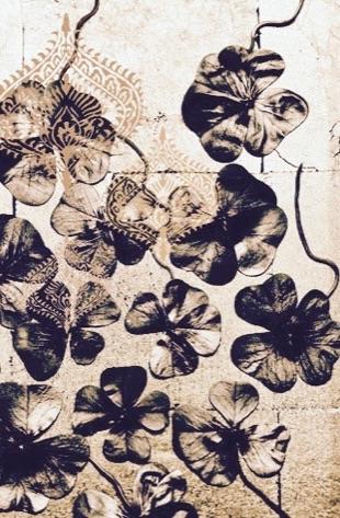 Grijze bloemen